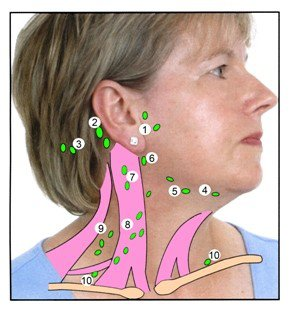 Lymph node locations in neck