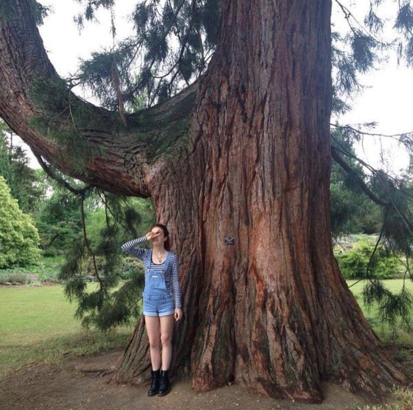 Sky standing next to a big tree